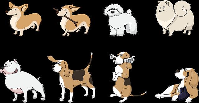 מה זה קורס ספרות וטיפוח כלבים